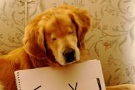Smiley, un cane disabile al servizio dei disabili!