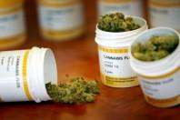 Cannabis terapeutica made in Italy