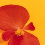 5 poesie sulla disabilità