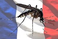Zika e Sindrome di Guillain-Barré, il legame esiste