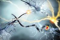 """Nuova terapia """"blocca"""" la sclerosi multipla, ma attenzione ai rischi"""