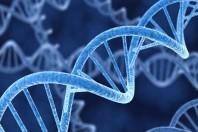 Scoperti nuovi geni mutanti nell'Autismo