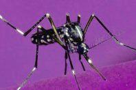 Il virus Zika può combattere il tumore al cervello?