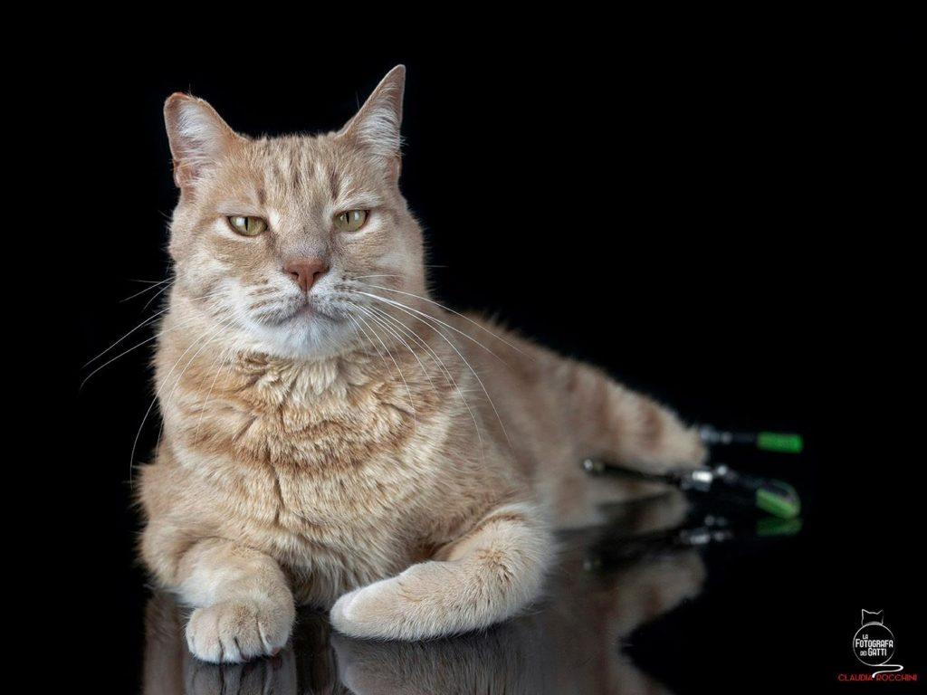 il gatto bionico italiano vito ability channel