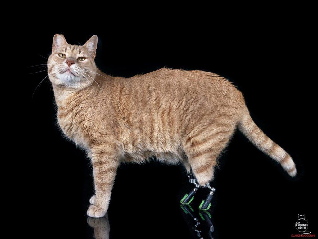 vito il gatto bionico italiano ability channel