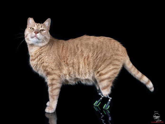 vito_gatti_disabili_bionico