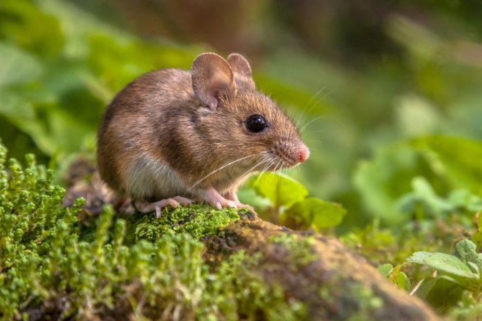 topo in cui è stata bloccata la SLA sclerosi laterale amiotrofica