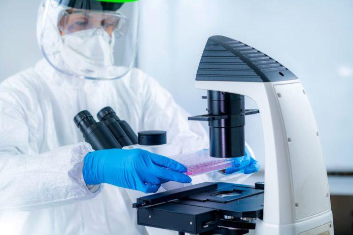 ricercatore studia immunità di gregge per coronavirus