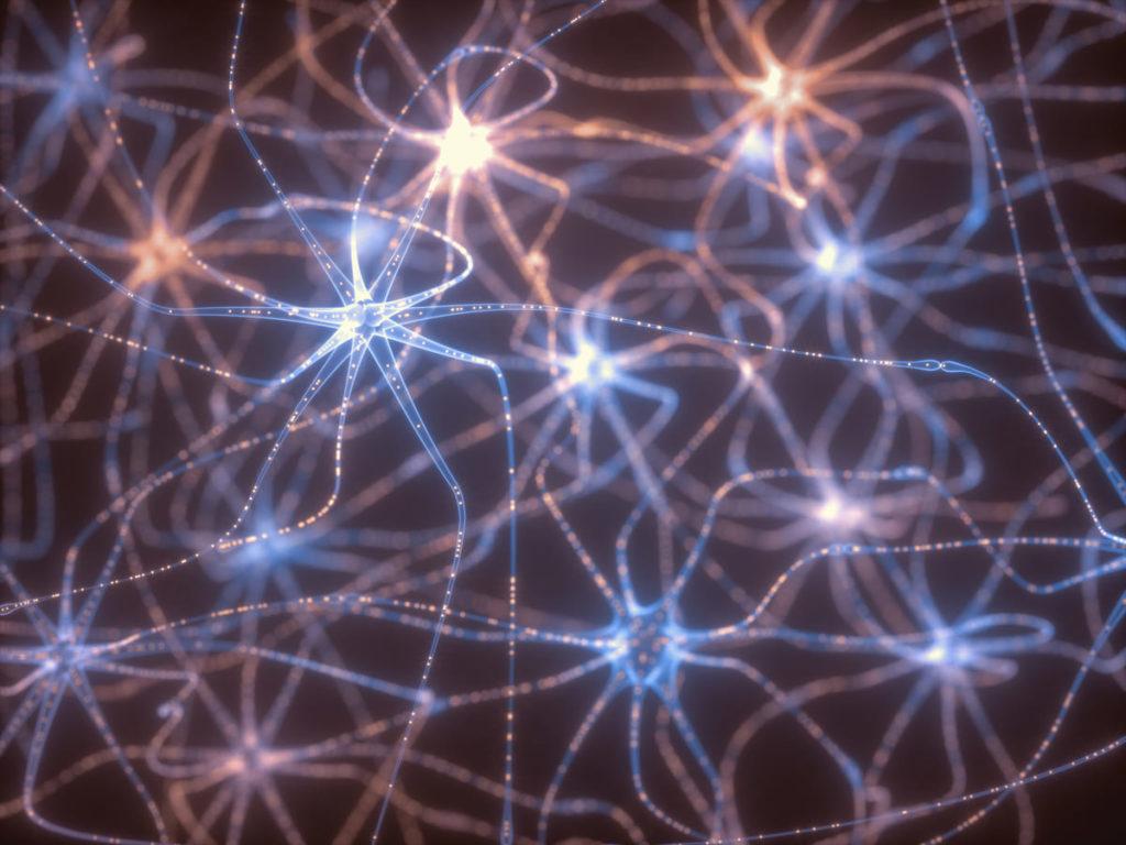 motoneurone a cosa serve