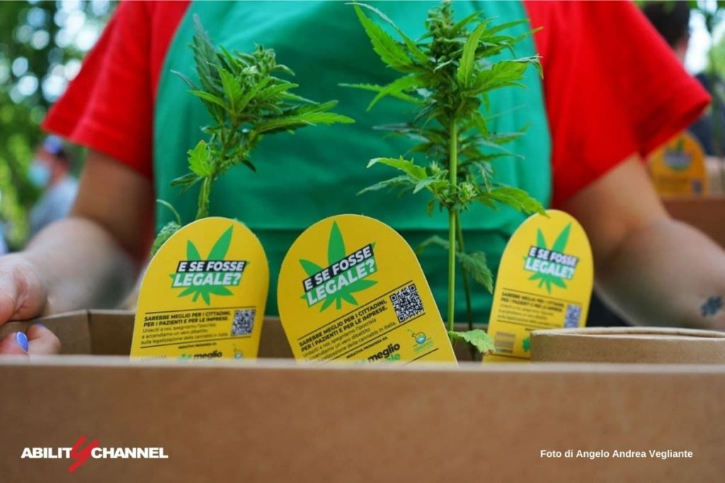cannabis terapeutica legale