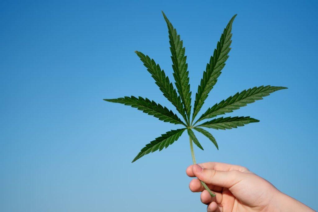 cannabis negli stati uniti d'america