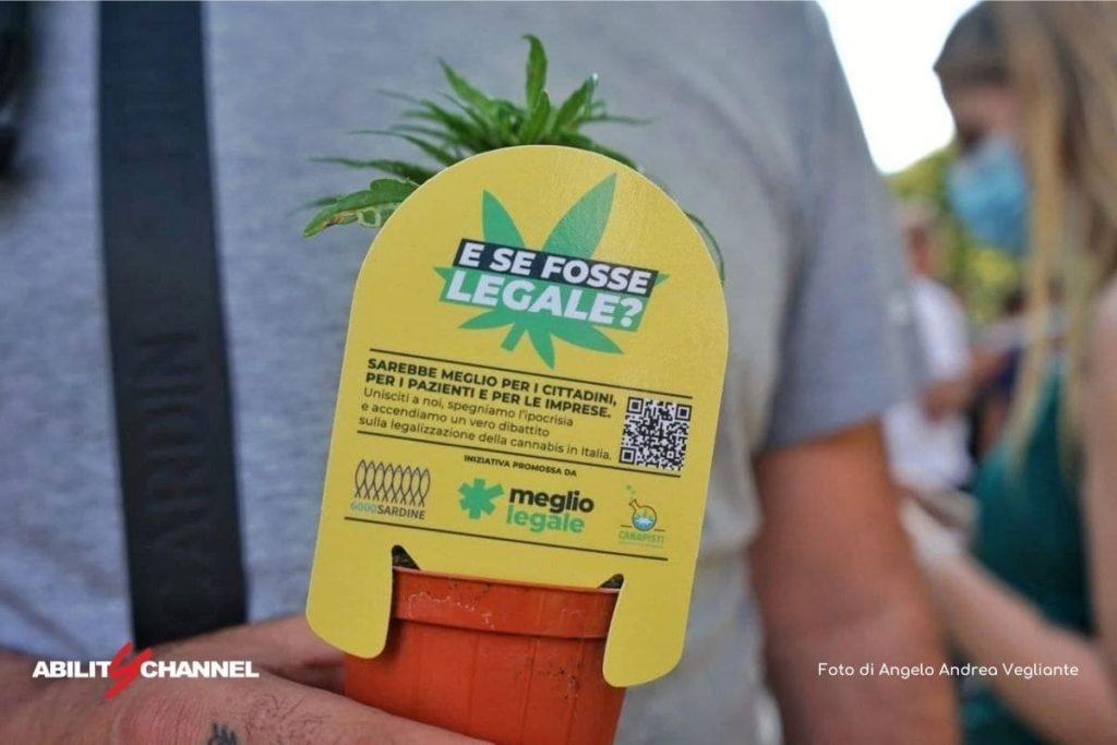 ddl cannabis legalizzazione in italia