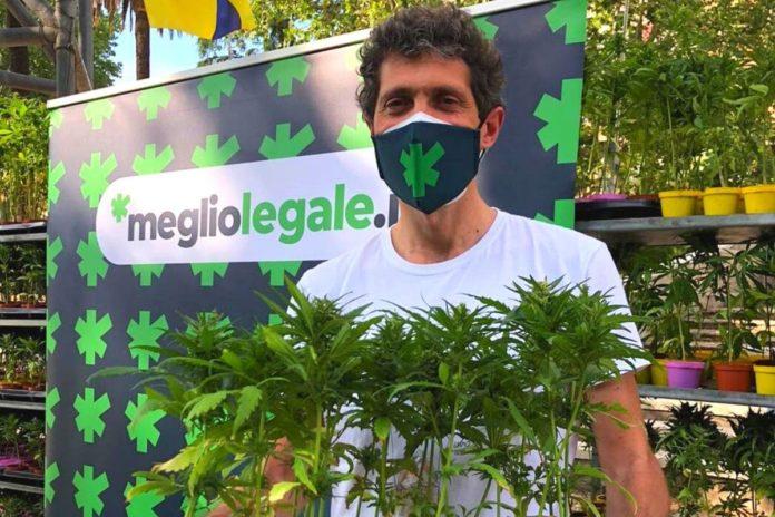 testo base coltivazione domestica cannabis
